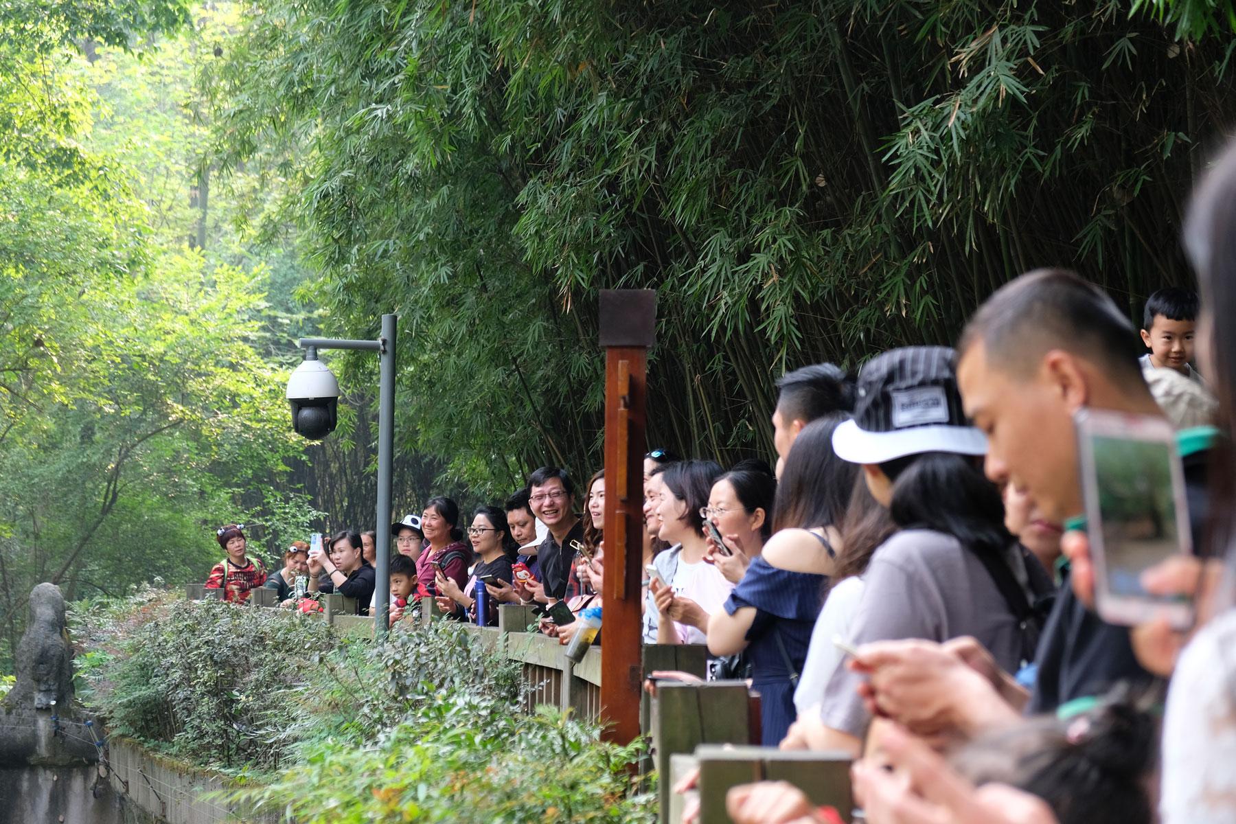 Chinesische Besucher der Aufzuchstation für Pandas in Chengdu.