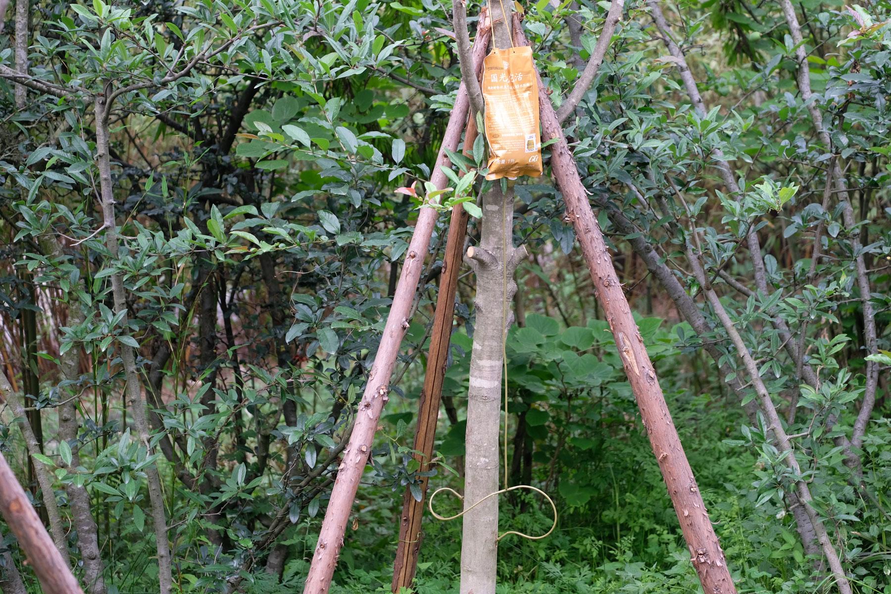 Ein Baum, an dem eine Infusionsflasche befestigt ist.