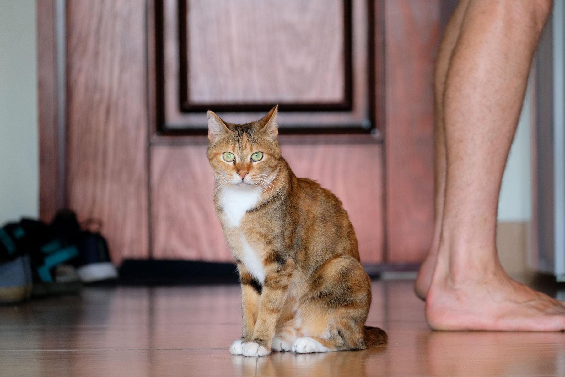 Eine Katze beim House Sitting.
