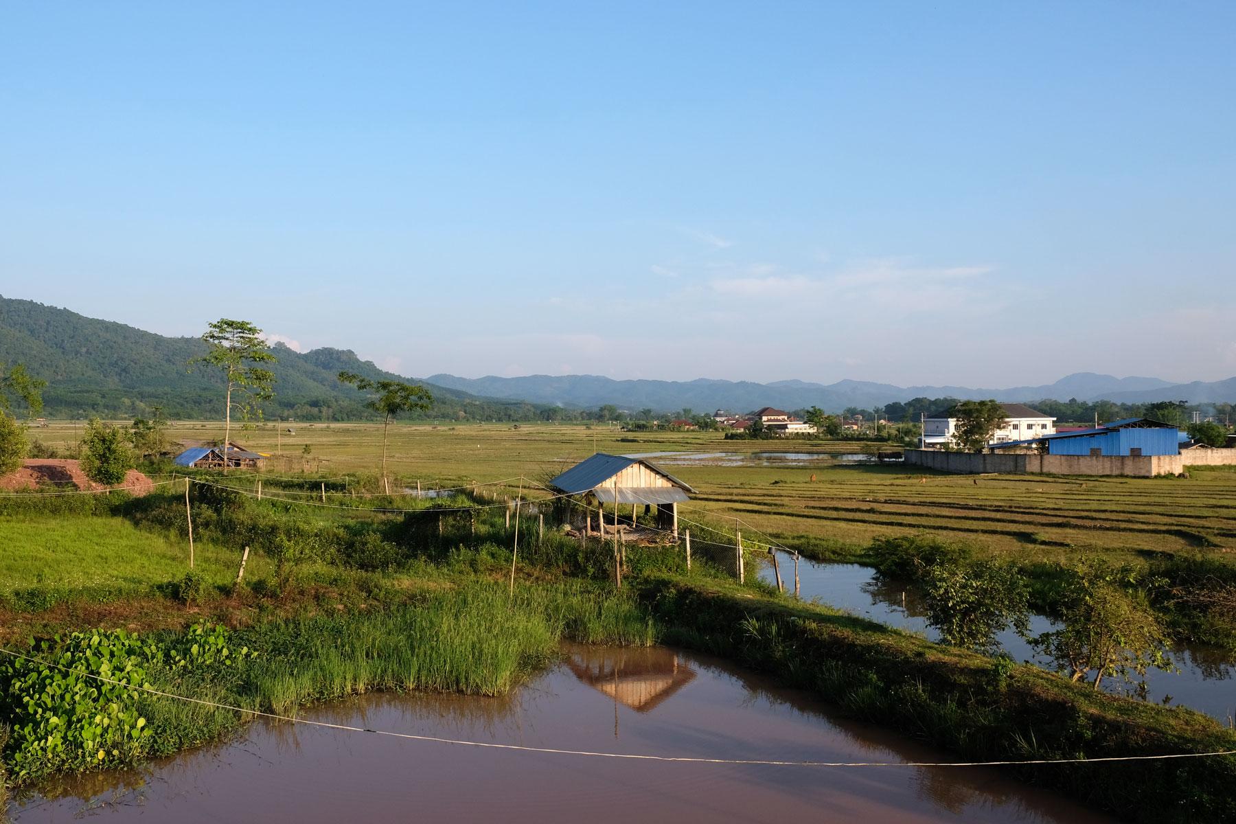 Reisfelder und ein Bach in Luang Namtha in Laos.