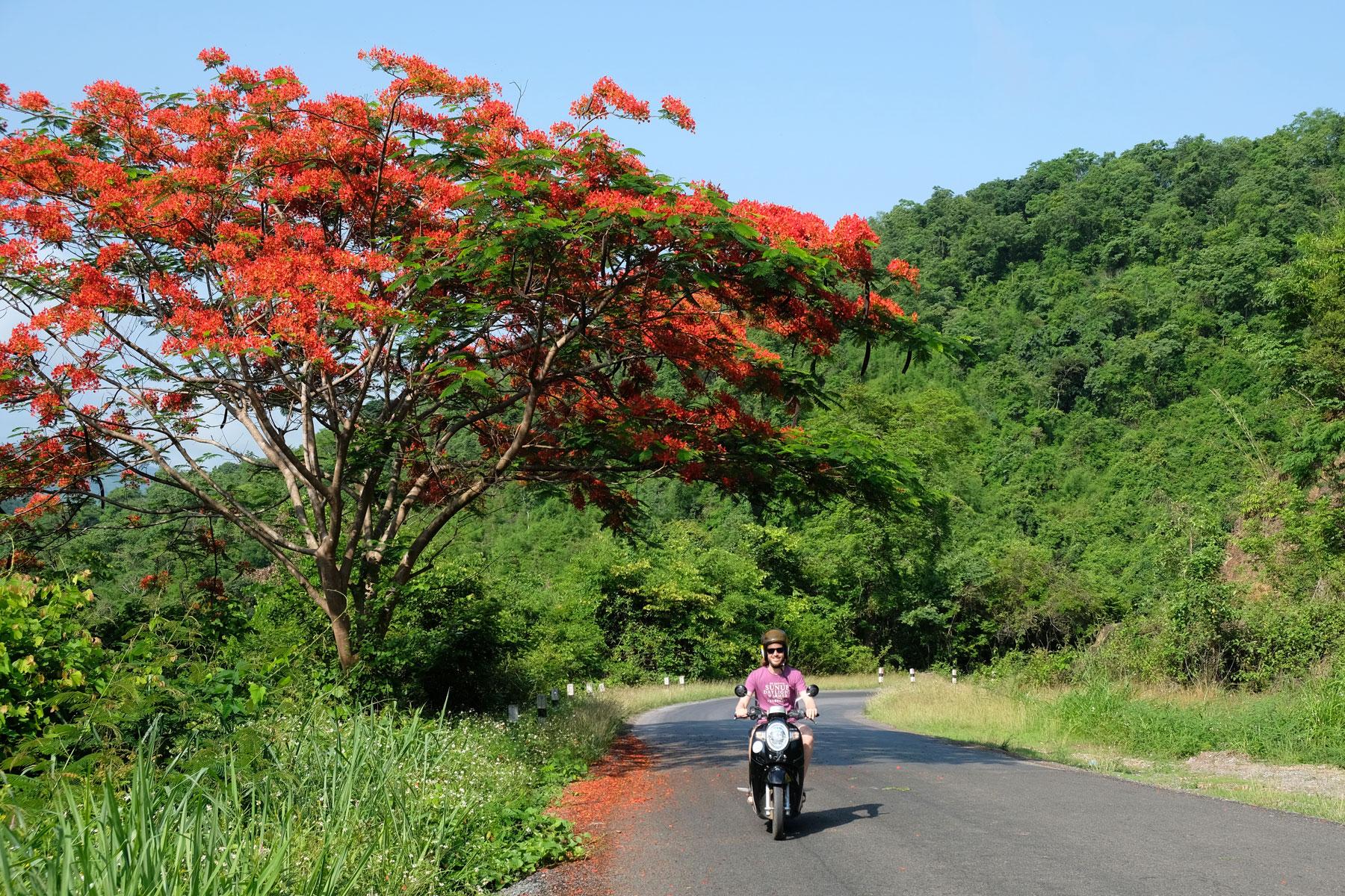 Sebastian fährt mit dem Motorroller unter einem rot blühenden Baum durch.