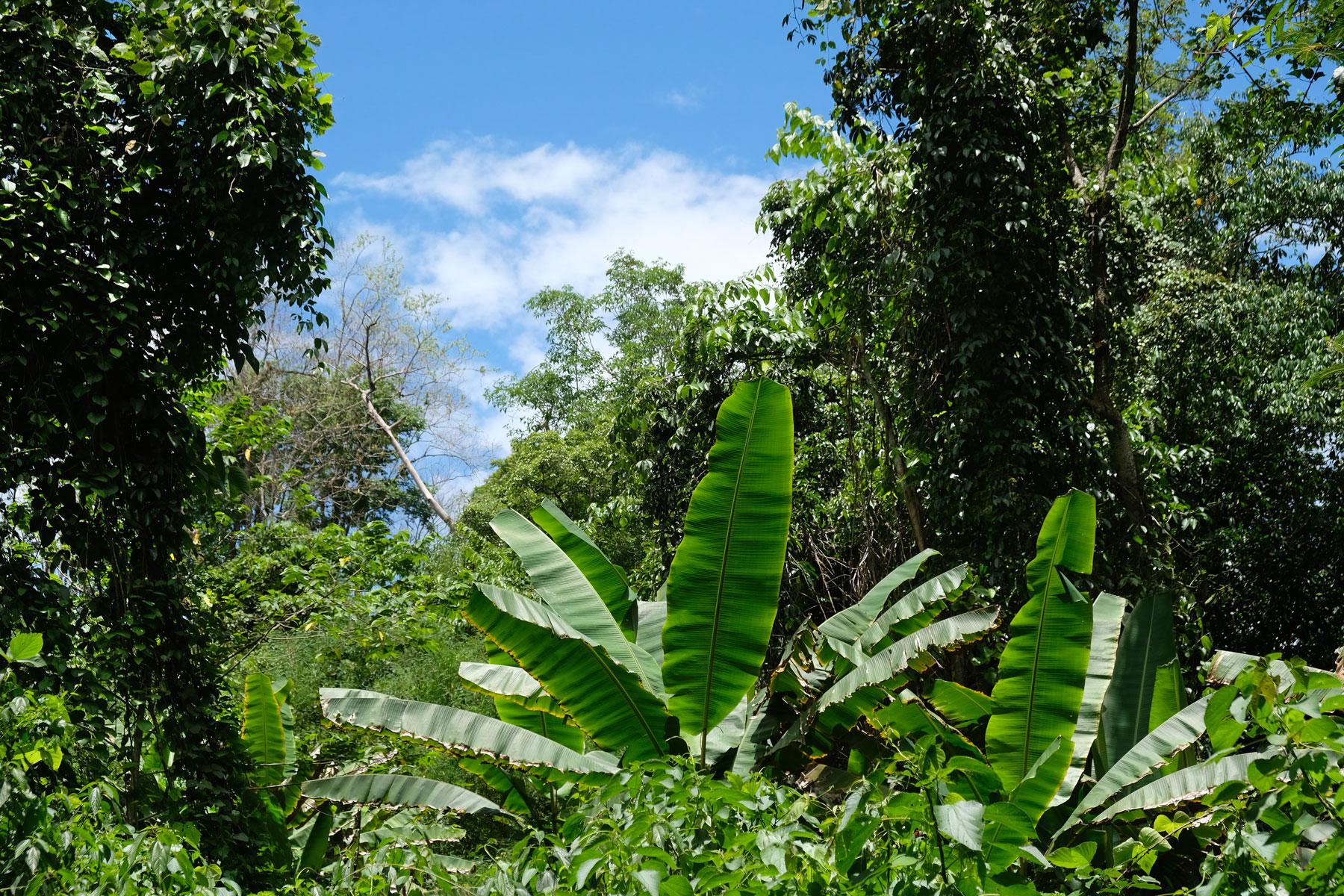 Bäume und Palmen im thailändischen Dschungel.