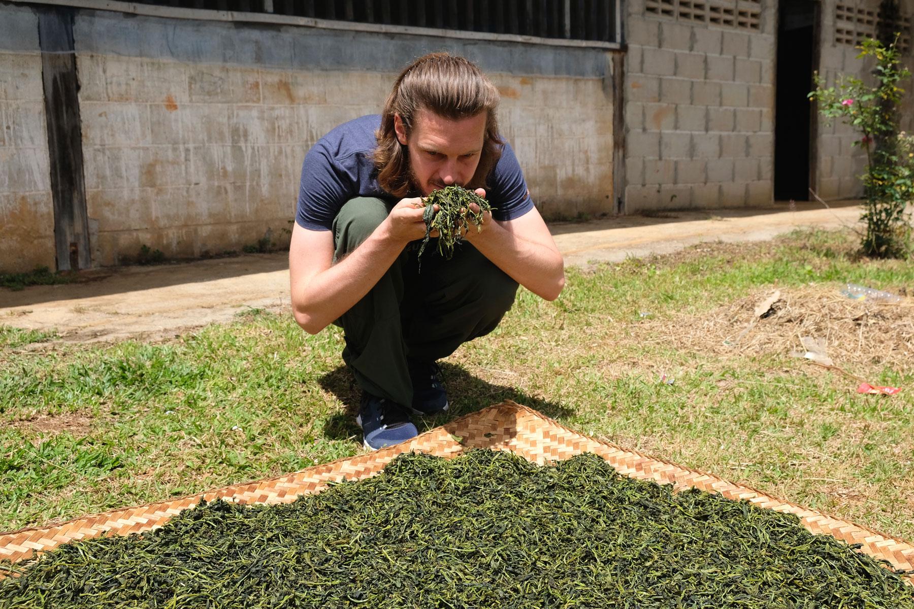 Sebastian riecht an verarbeitetem Tee, der in Ban Rak Tahai in der Sonne trocknet.