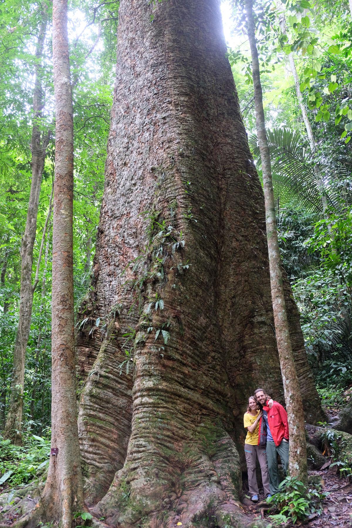 Leo und Sebastian stehen vor dem Stamm eines riesigen Krabach-Baums in Thailand.