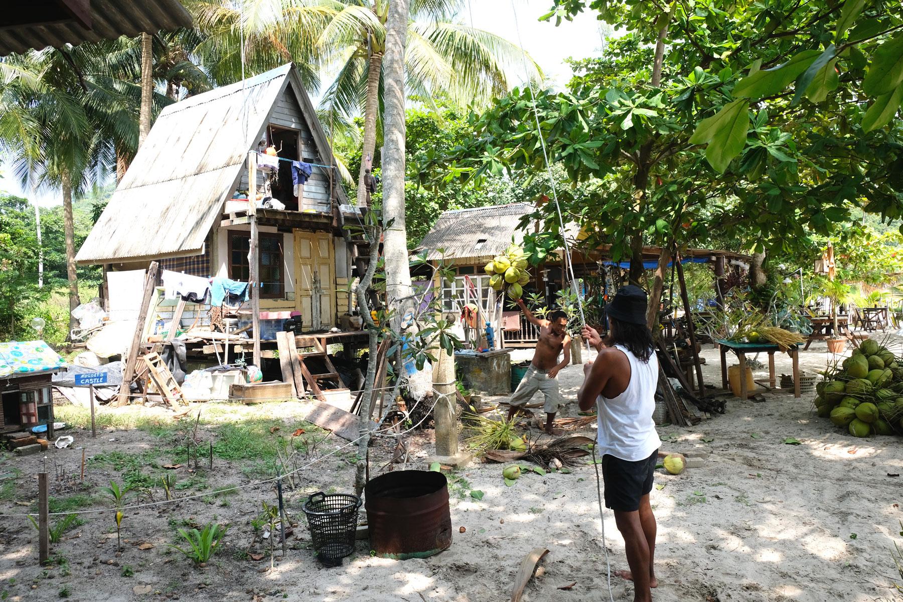 Zwei Männer lassen langsam mehrere an einem Seil hängende Kokosnüsse zu Boden