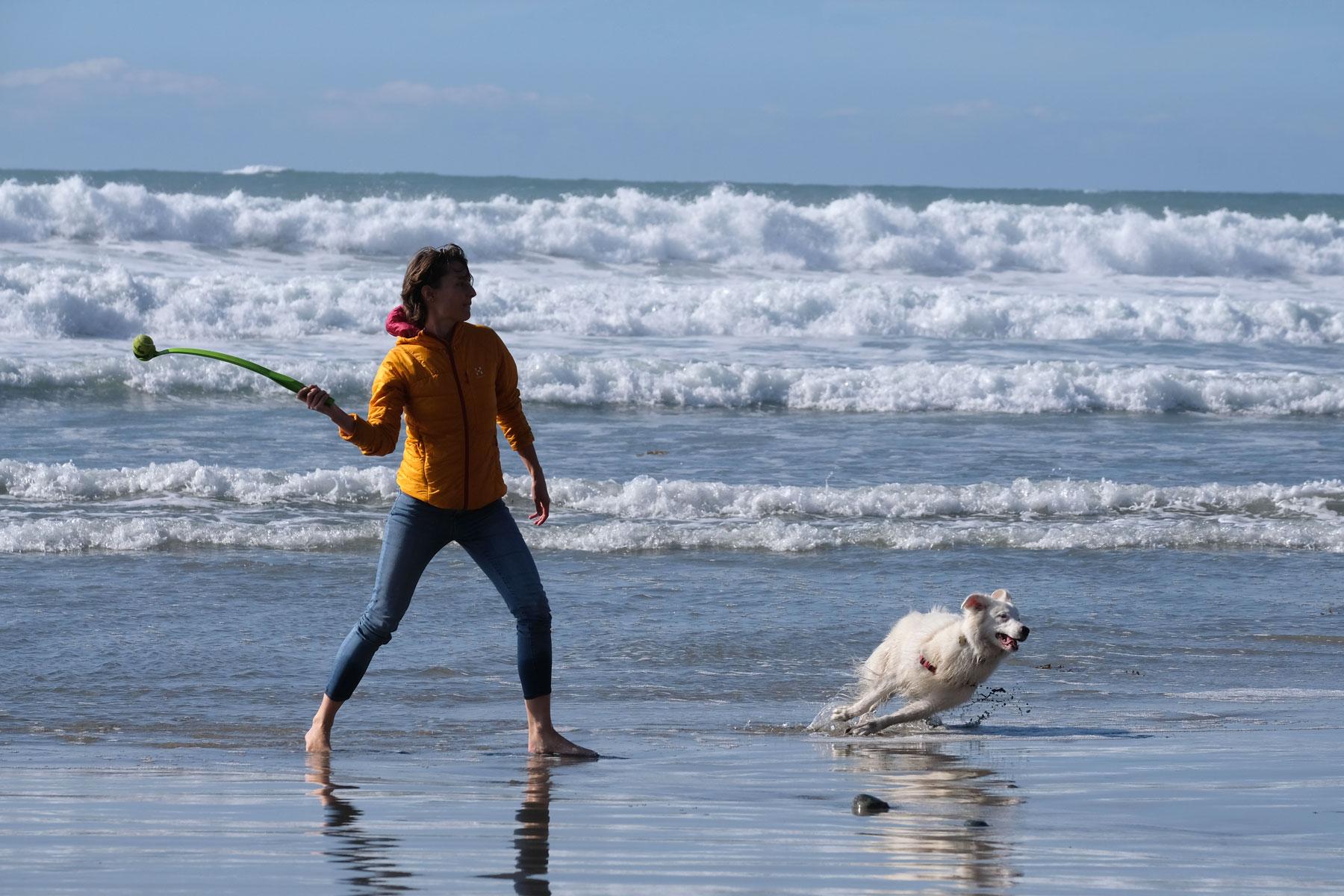 Leo spielt mit einem Hund am Strand.