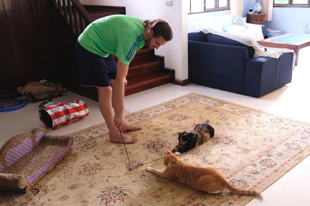Sebastian spielt mit zwei Katzen beim House Sitting.