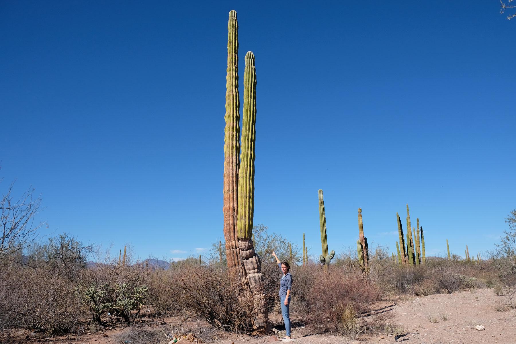 Leo steht vor einem riesigen Kaktus auf der Baja California, Mexiko.