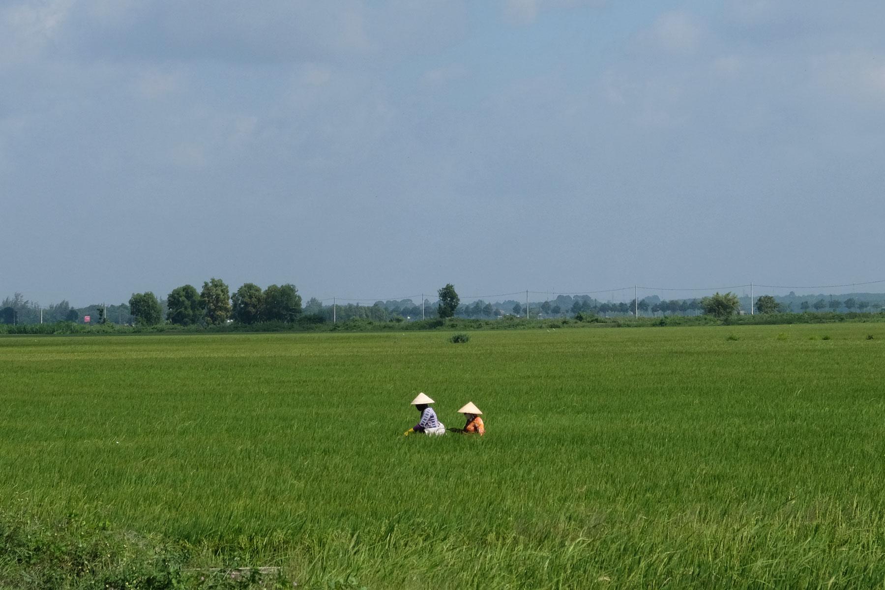 Zwei Frauen mit spitzen Strohhüten stehen in einem Reisfeld.
