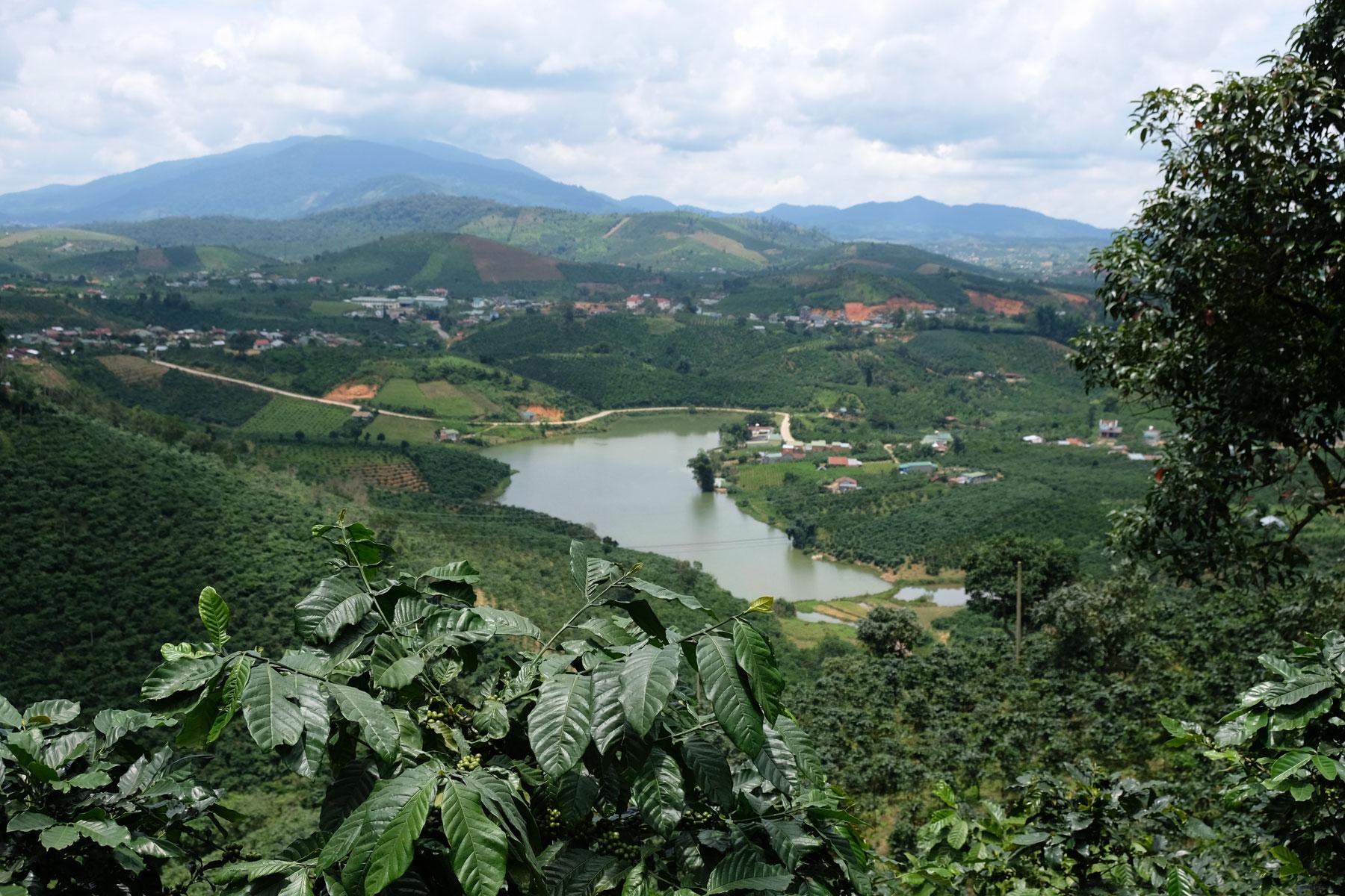 Vorne im Bild ist eine Kaffeeplanze zu sehen, dahinter ein See im Hochland Vietnams nahe der Stadt Dalat.