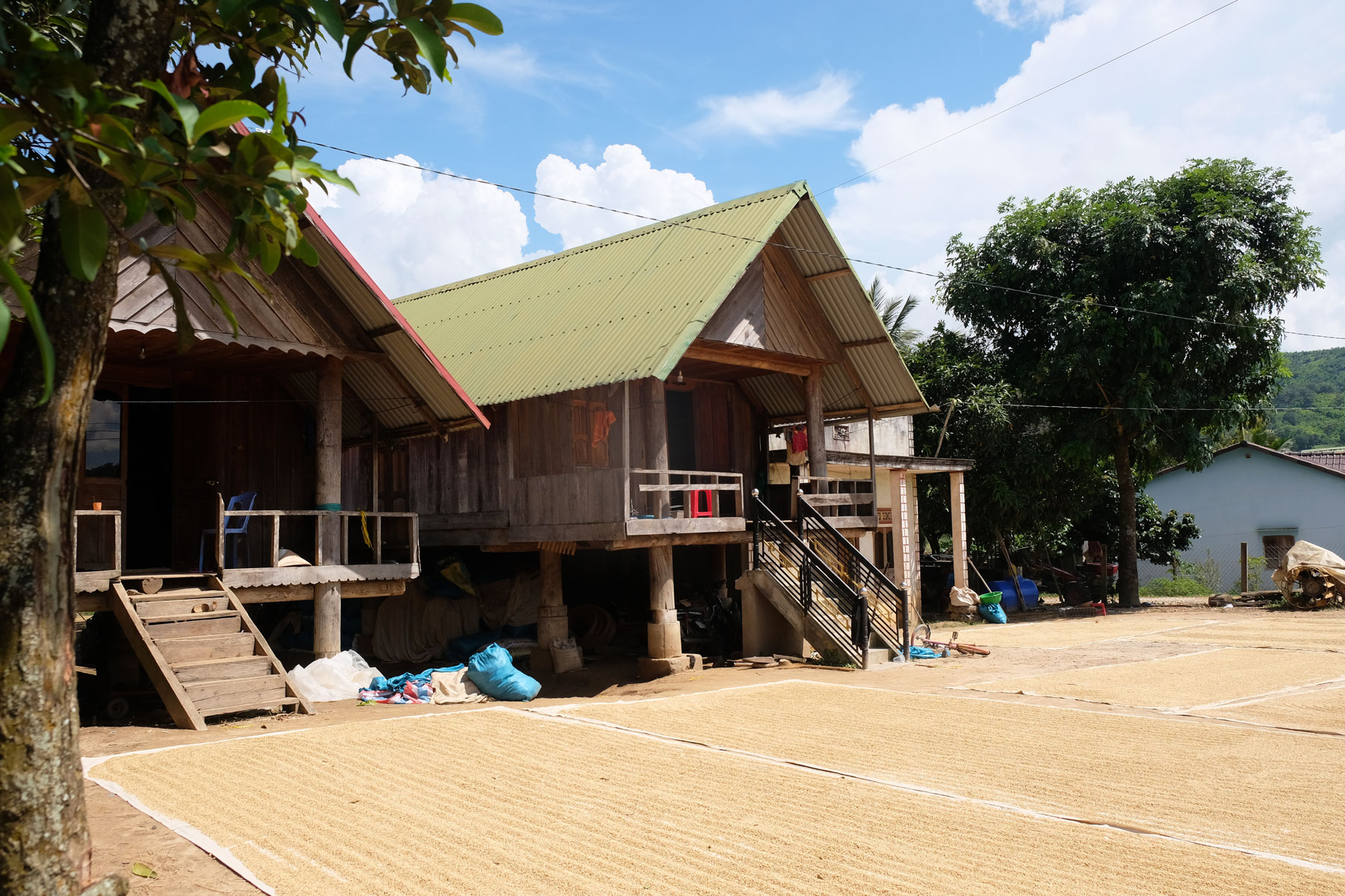 Vor zwei Stelzenhäusern aus Holz liegen riesige Planen, auf denen Reis in der Sonne trocknet.