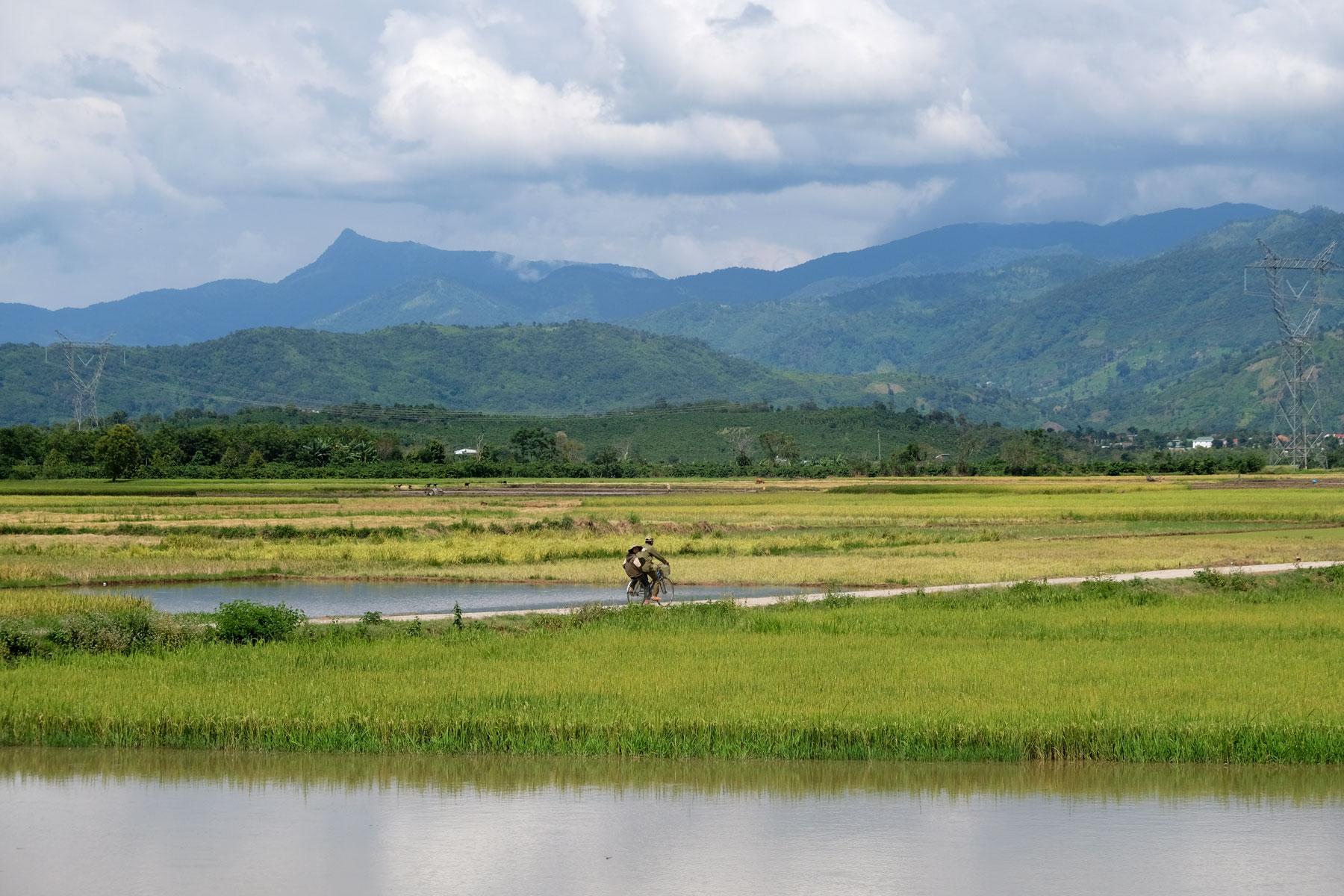Ein Mann fährt mit seinem Fahrrad durch die Reisfelder im Hochland Vietnams.