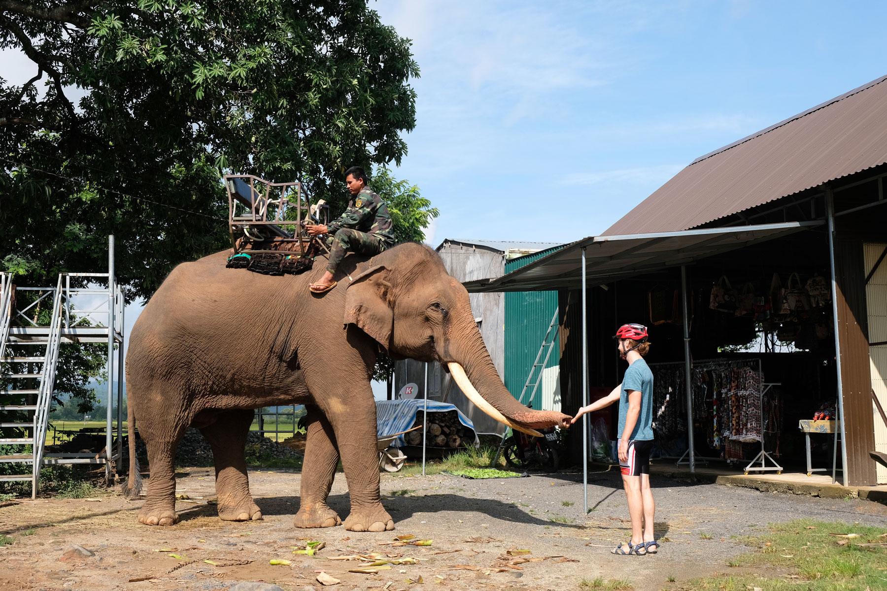 Sebastian begrüßt einen Elefanten in Lien Son in Vietnam.