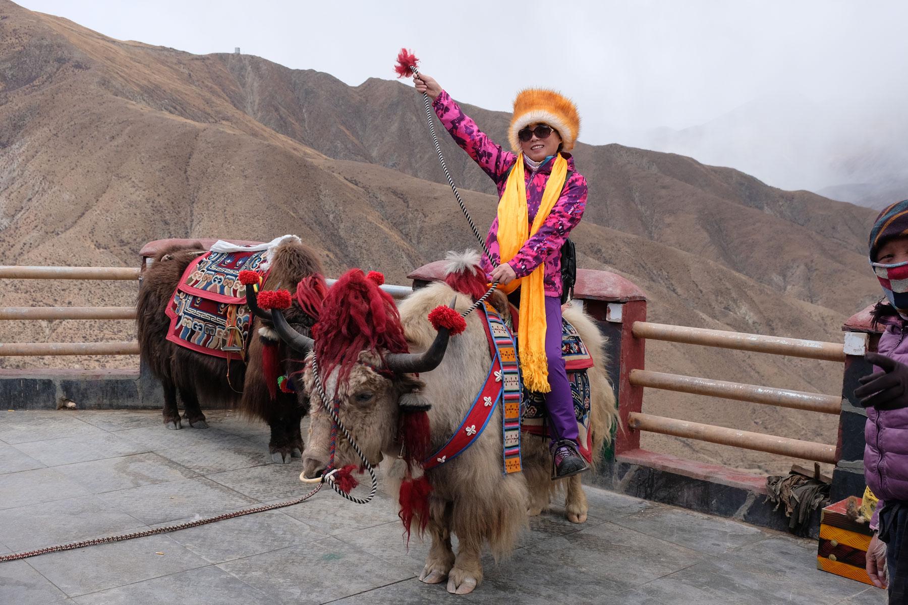 Eine Chinesin sitzt auf einem Yak und trägt traditionelle tibetische Kleidung.