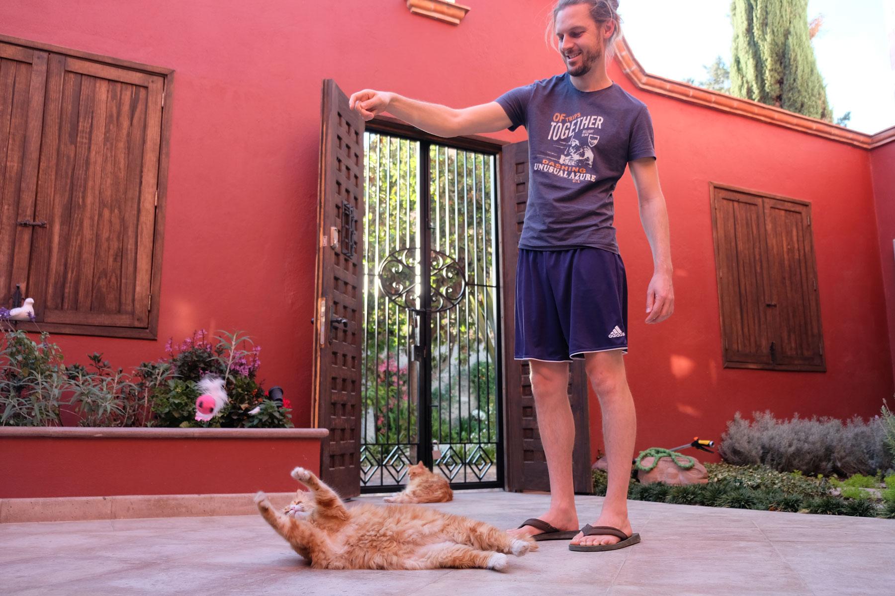 Sebastian spielt mit Kater Curry beim House Sitting in San Miguel de Allende in Mexiko.