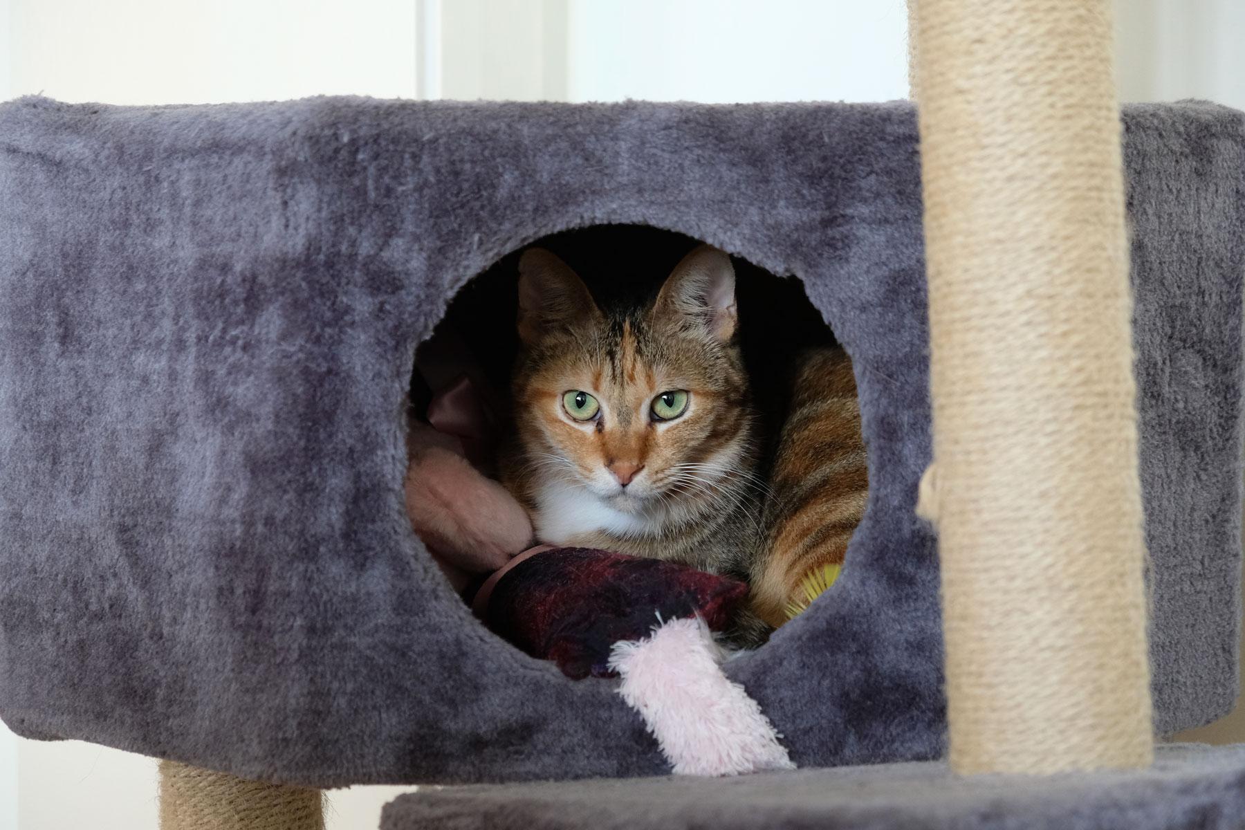 Katze Mayo schaut aus dem runden Eingang ihres Verstecks heraus.