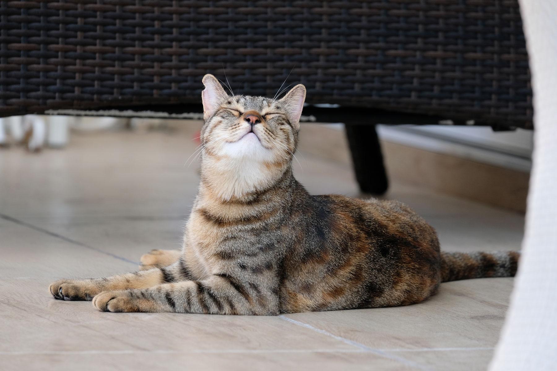 Beim House Sitting passen wir auch auf Katze Possum auf.
