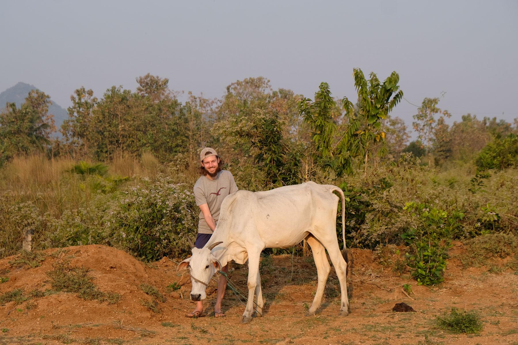 Sebastian hütet als Freiwilliger eine Kuh beim Workaway.