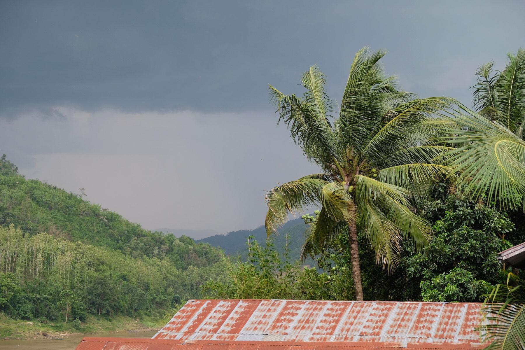 Eine Palme und Gewitter in Laos