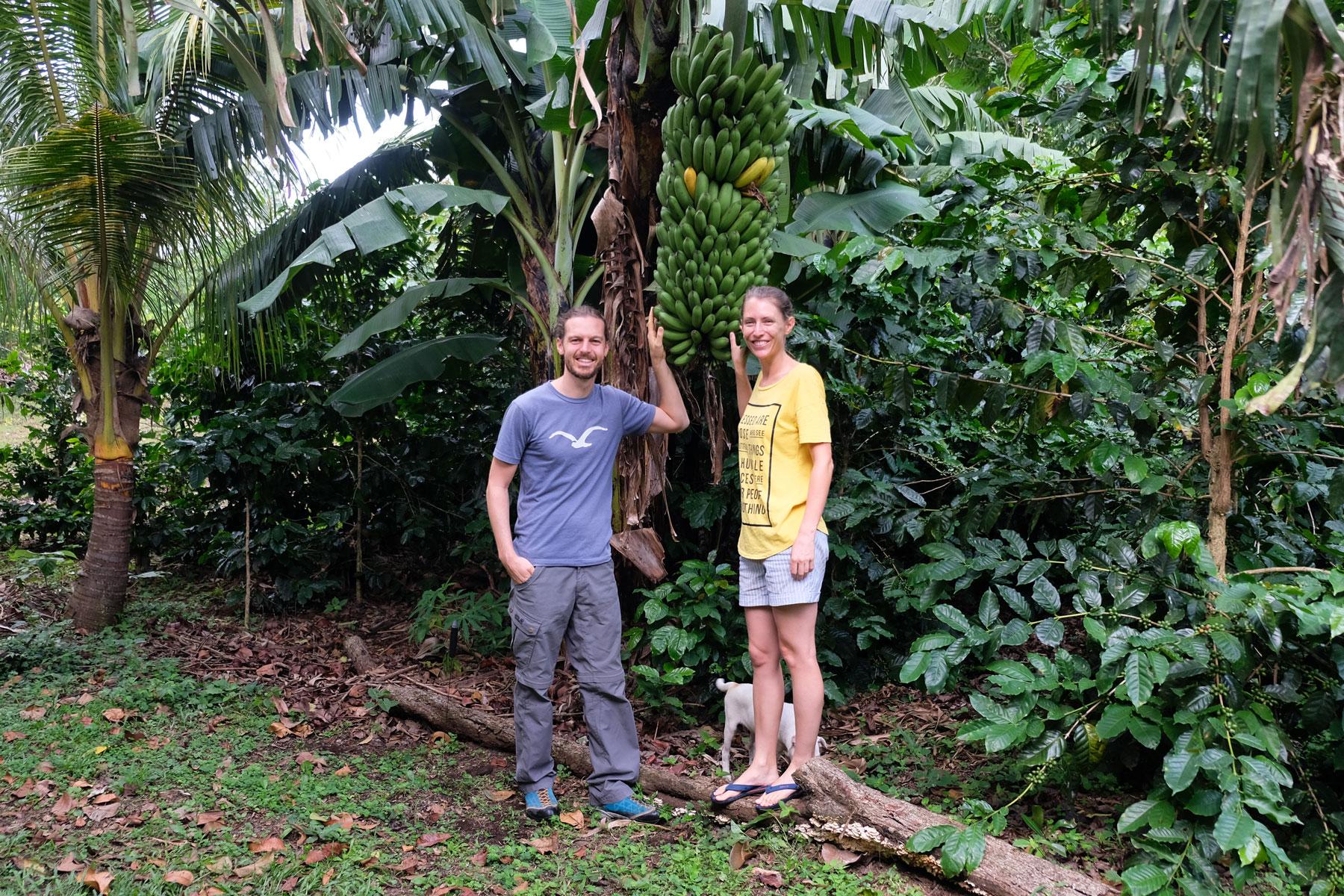 Leo und Sebastian mit einer großen Bananenstaude in Nicaragua.