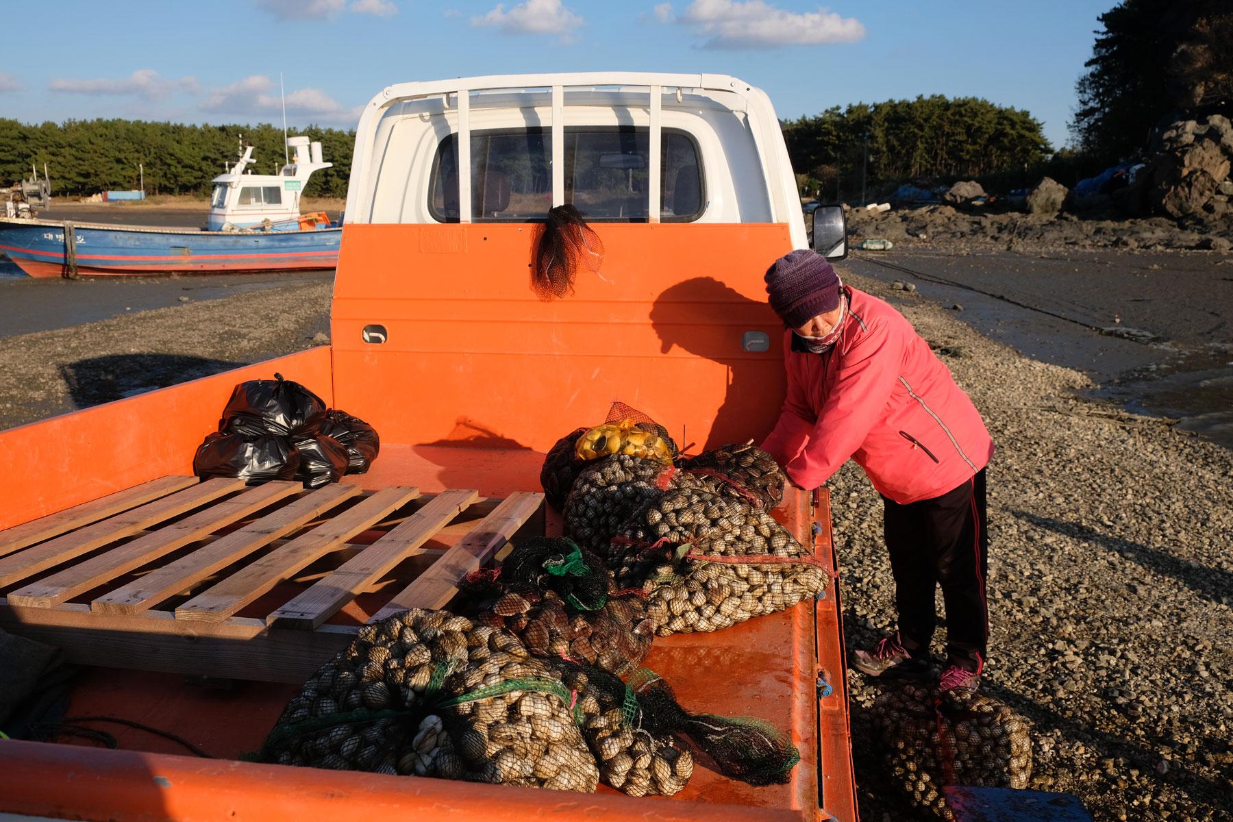Muscheln werden auf der Ladefläche eines kleinen Transporters gewogen.