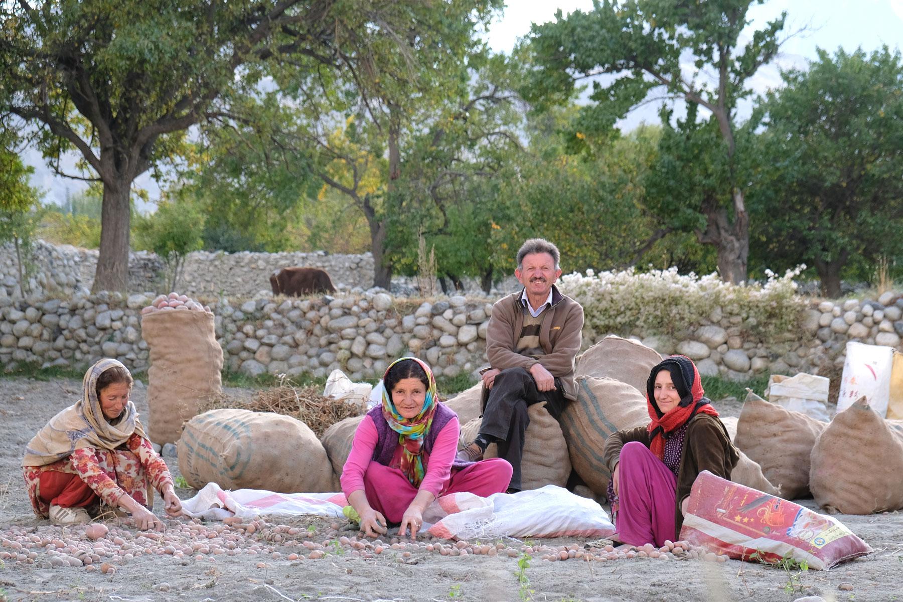 Menschen sitzen auf einem Feld in Pakistan und ernten Kartoffeln.