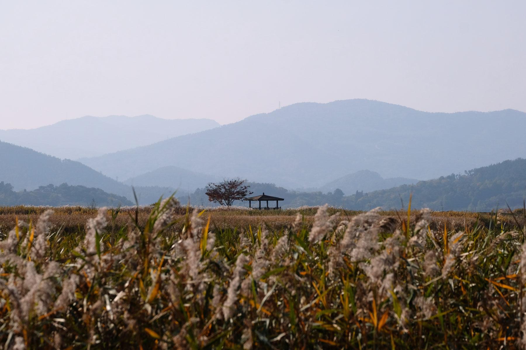 Ein Haus steht inmitten des Suncheon Wetland Reserves in Südkorea.
