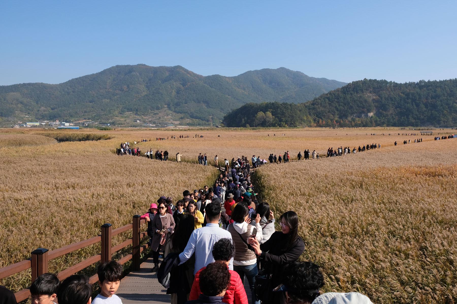Im Suncheon Wetland Reserve schieben sich die Menschen über die Holzwege.