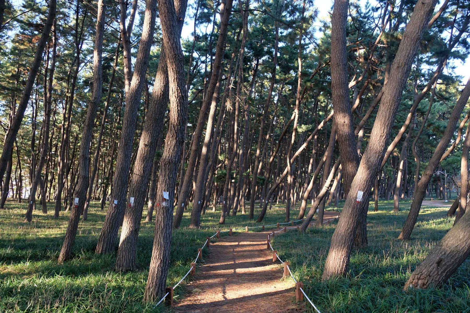 Ein Weg führt durch den Wald in Socheon, Südkorea.