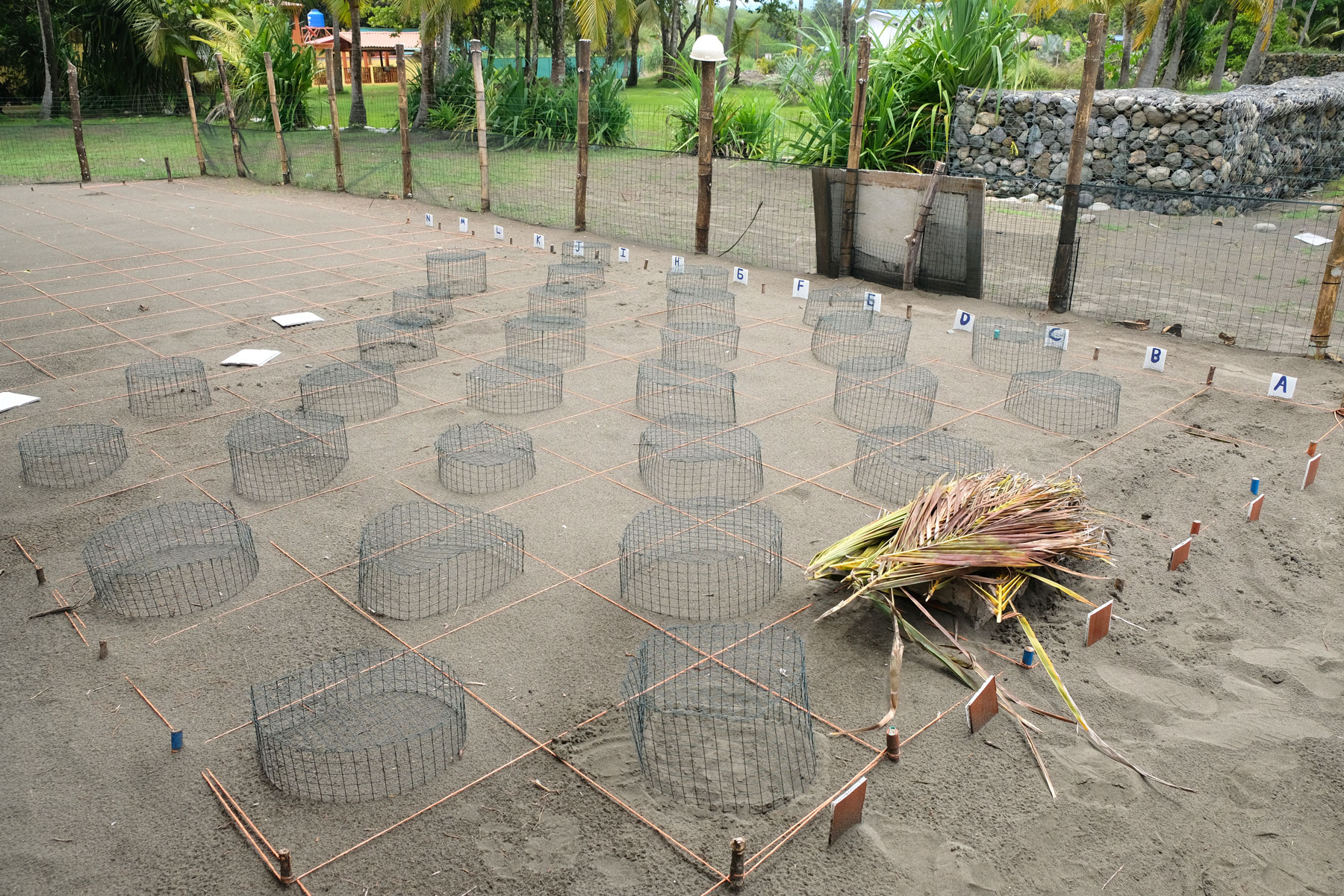 Am Strand Playa Bandera bereibt Víctor ein Schildkrötenprojekt.