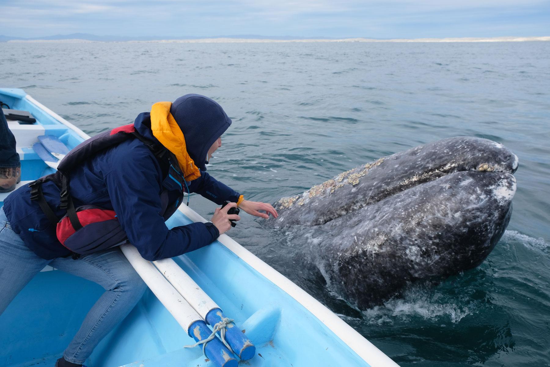 Leo berührt einen Grauwal in Mexiko.