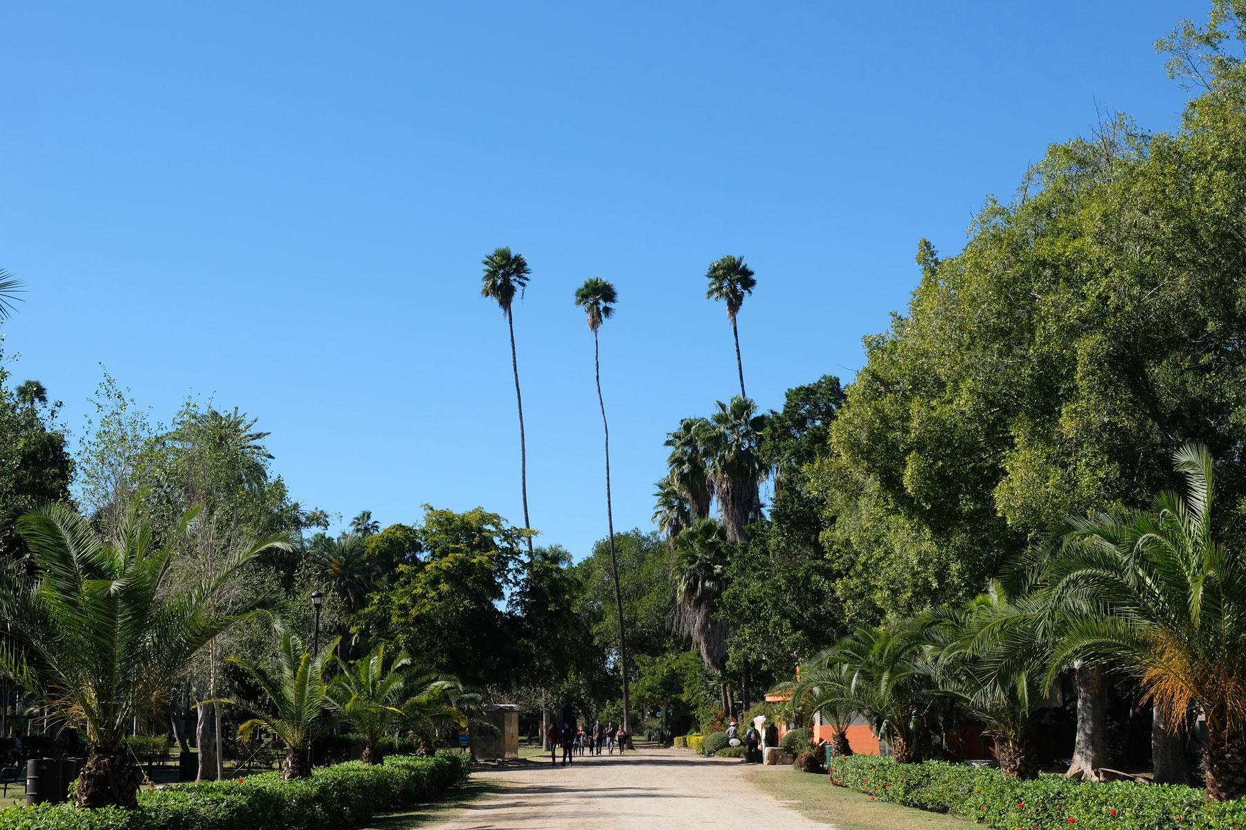 Der Botanische Garten in Los Mochis in Mexiko.